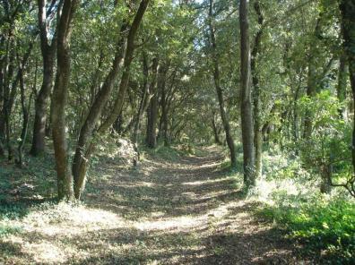 Camí del bosc